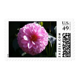 Fuchsia color dahlia photo stamp