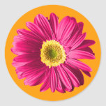Fuchsia Daisy Flower Sticker