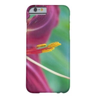 Fuchsia Daylily iphone 6 Barely There iPhone 6 Case