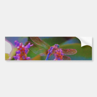Fuchsia  flower and dragon fly bumper stickers