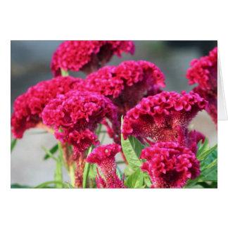Fuchsia Flower Card