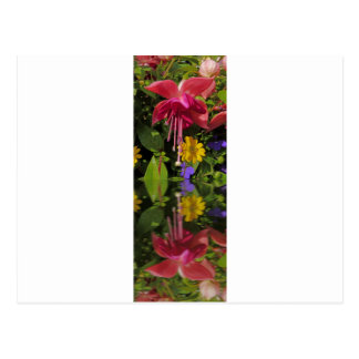 Fuchsia  flower in reflection postcard