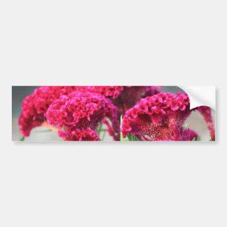 Fuchsia Flowers Bumper Sticker Car Bumper Sticker
