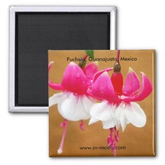 Fuchsia (fuschsia), San Gabriel de Barrera Magnet