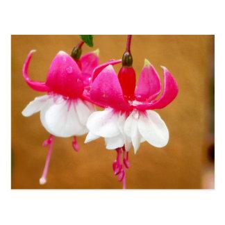 Fuchsia (fuschsia), San Gabriel de Barrera Postcard