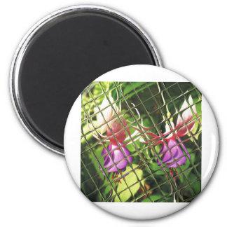 Fuchsia 'Golden Eden Lady' Magnet