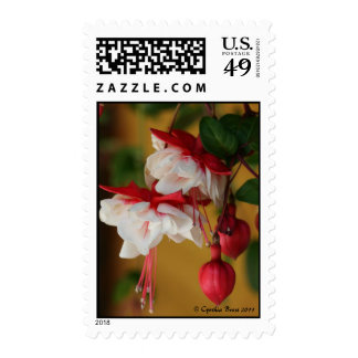 Fuchsia in Bloom Postage Stamp