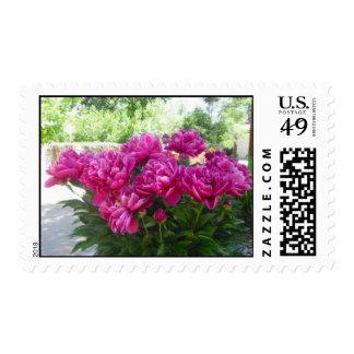 Fuchsia Peony Postage
