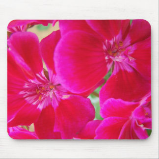 Fuchsia pink geranium flower in bloom mouse pad
