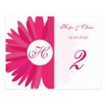 Fuchsia Pink Gerber Daisy Table Number Cards Postcards