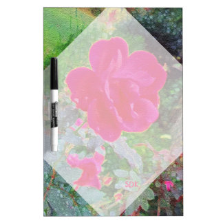 Fuchsia Pink Rose Flower in Bloom with Water Dew Dry-Erase Board