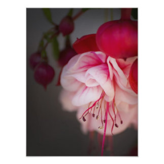 Fuchsia Pink White and Red Flowers Photo Print