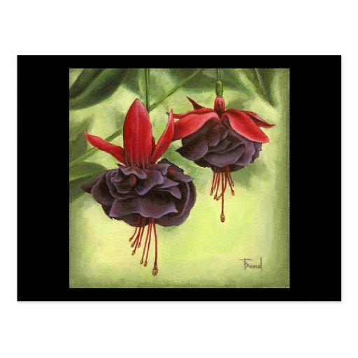 Fuchsia Postcard