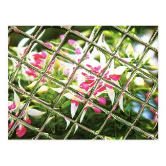 Fuchsia 'Rose Quartet' Post Cards