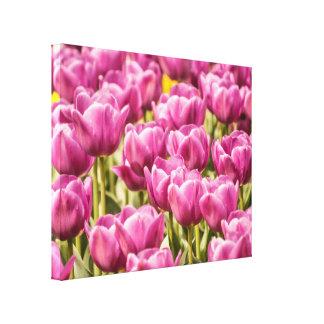 Fuchsia Tulip - Canvas