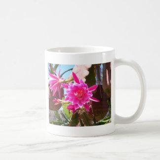 Fucsia Epiphyllum Taza De Café
