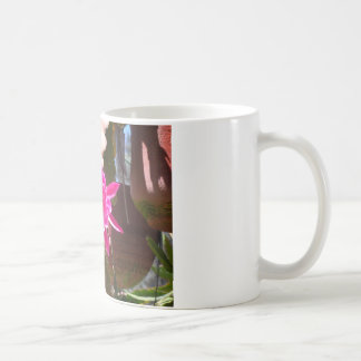 Fucsia Epiphyllum Tazas De Café