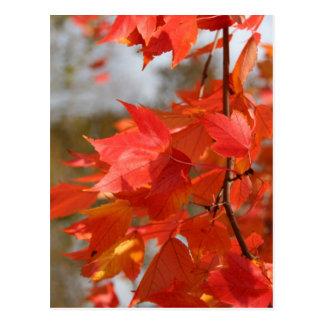Fuego del otoño postal