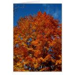 Fuego del top del árbol de Blank_Orange Tarjeton