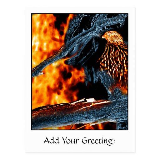 Fuego e hielo Shinned sostenido del halcón. (0112) Postales