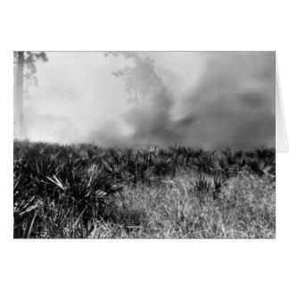 Fuego salvaje, marismas de la Florida, verano 1927 Felicitación