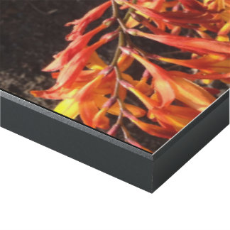 Fuegos artificiales anaranjados impresión en madera