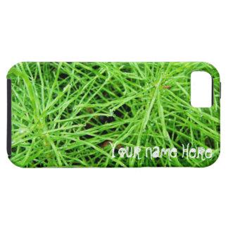 Fuegos artificiales de la hierba verde; iPhone 5 carcasas