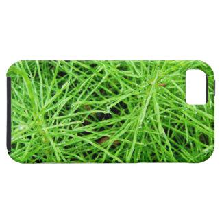 Fuegos artificiales de la hierba verde; Ningún iPhone 5 Funda