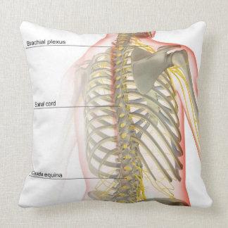 Fuente del nervio del cuerpo superior almohadas
