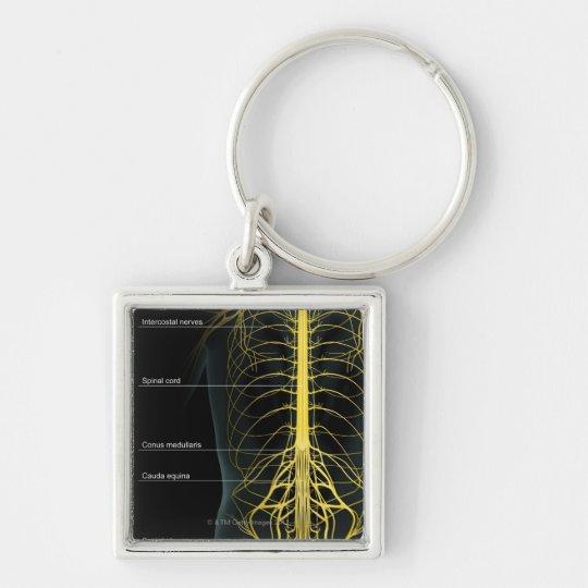 Fuente del nervio del tronco llavero cuadrado plateado