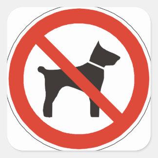 Fuentes de escuela ningunos perros pegatina cuadrada