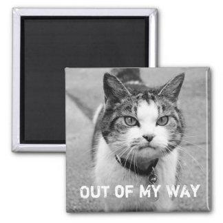"""""""Fuera imán malhumorado del gato de mi manera"""""""