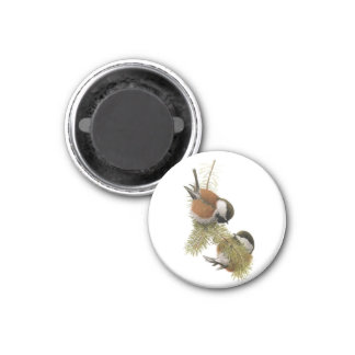 Fuertes' Chestnut-backed Chickadee 1 Inch Round Magnet
