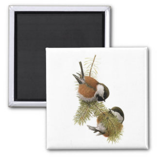 Fuertes' Chestnut-backed Chickadee 2 Inch Square Magnet