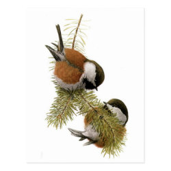 Postcard with Fuertes' Chestnut-backed Chickadee design