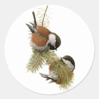 Fuertes Chestnut-backed Chickadee Sticker