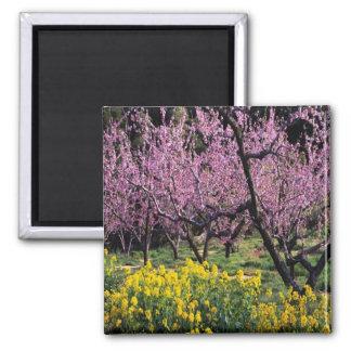 Fukushima Peach Blossoms Japan magnet