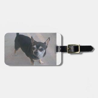 full 3 Chihuahua.png Bag Tag