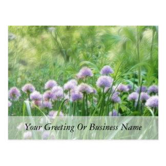 Full Bloom - Chive Flowers Postcard