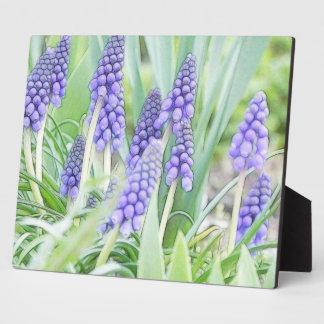 Full Bloom - Grape Hyacinths Plaque
