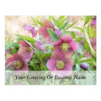 Full Bloom - Hellebores Post Cards