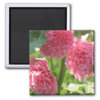 full bloom hollyhock refrigerator magnets