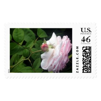 Full Bloom Rose and Pink Flower Bud Postage Stamp