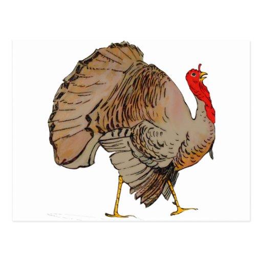 Full Color Thanksgiving Turkey Postcard