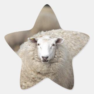 Full fleece sheep star sticker