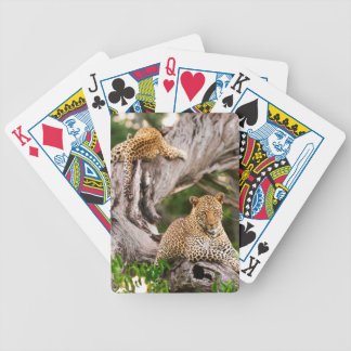 Full Grown Leopard (Panthera Pardus) Cub Bicycle Playing Cards