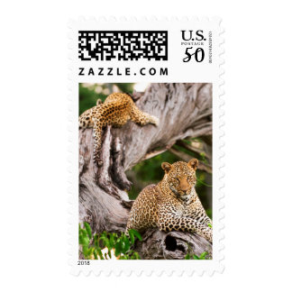 Full Grown Leopard (Panthera Pardus) Cub Postage