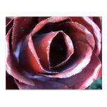 Full Metal Rose Post Cards