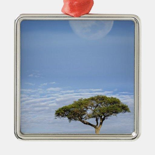 Full moon above acacia trees, Masai Mara, Ornaments