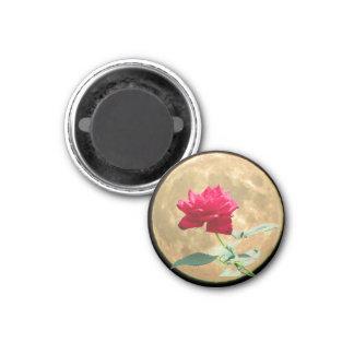 Full Moon and Full Bloom Rose Magnet